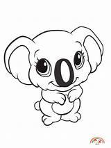 Coloring Zoo Koala Animals Animal Blogx sketch template