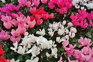 Blumen Im Winter : 20 beliebte garten blumen f r fr hling sommer herbst winter ~ Eleganceandgraceweddings.com Haus und Dekorationen