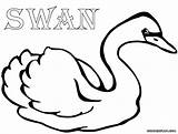 Swan Coloring Colouring Colorings sketch template