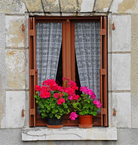 fioriere per davanzale finestra window with lace curtains and geraniums windows
