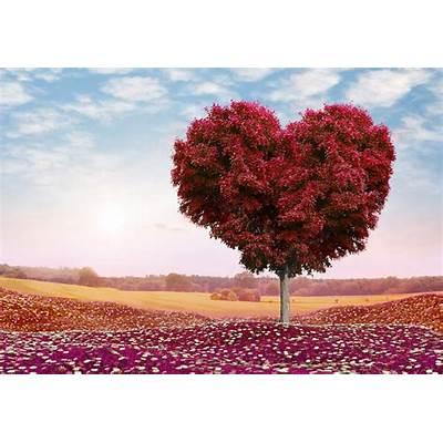 sky romance clouds flower the field nature heart love tree