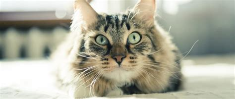 are cats color blind are cats colorblind the smart living network