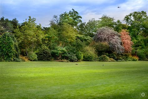 Background Images Of Trees by Green Meadow Trees And Birds Background High Quality
