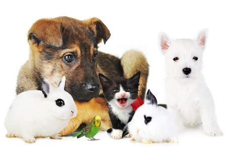 pat les animaux de compagnie assurance animaux de compagnie