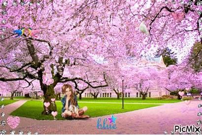 Blossom Cherry Picmix