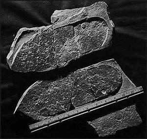 Visz A Víz Sodor Tiltott Archeoló Csalni Hazudni