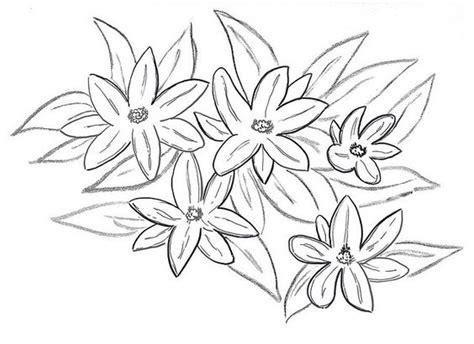 Jasmine Flowers Drawing