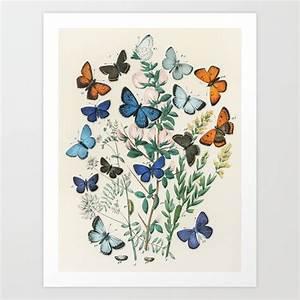 Vintage Scientific Illustration Butterfly Botanical Floral