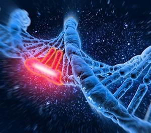 Snippet   Genetic Mutation