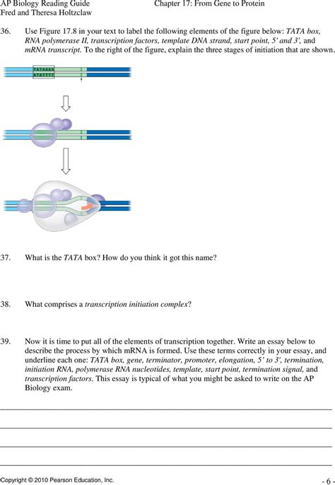 Chapter 17 From Gene To Protein Pdf