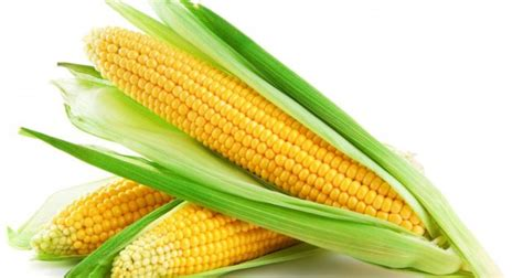 Tips on selecting which forage maize varieties to grow in 2015
