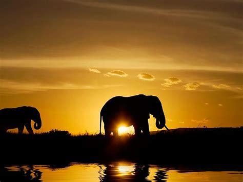 Elefantes Sunset Wallpaper Fondos De Pantalla Gratis