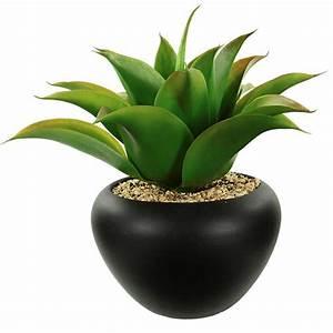 Plantes à Suspendre : plante ~ Premium-room.com Idées de Décoration