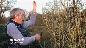 Taille De L Hibiscus : fin de l 39 hiver tailler vos hibiscus silence a pousse ~ Melissatoandfro.com Idées de Décoration