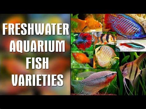ornamental fish wholesale price  ornamental fish  india