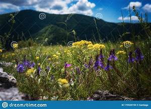 The, Beautiful, Green, Mountain, On, Summer, Time, Stock, Photo
