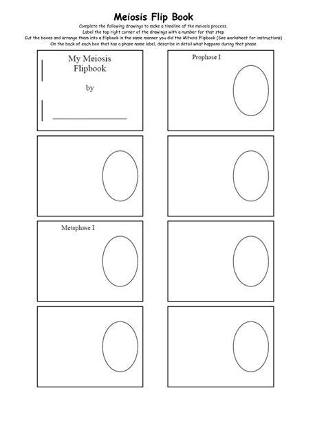 flip book template 16 best images of steps of meiosis worksheet answers meiosis stages worksheet meiosis