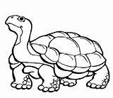 Tortoise Gopher Limbo Gumbo Ages Burrow Coloring Bubble Wrap Activity Craft sketch template