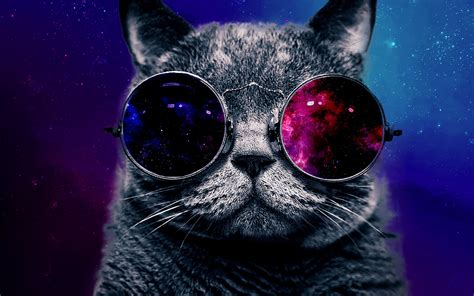 galaxy cats space galaxy cat with glasses page 2 pics about space