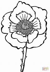 Poppy Flower Coloring Drawing Sheets Line Poppies Colouring Clipart Printable Supercoloring Clip Remembrance sketch template