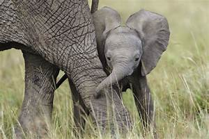 Image Gallery mother baby african elephant