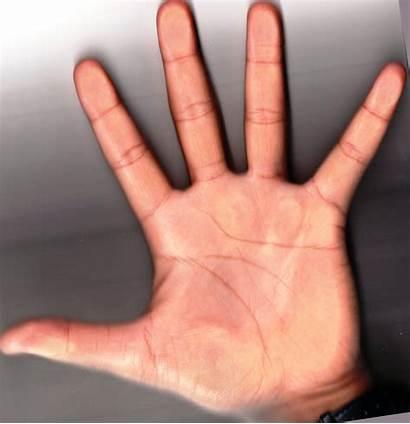 Palm Reading Celebrity Hand Left Palms Subodh
