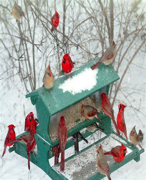bird table bird cages