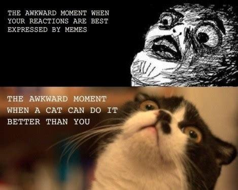 Awkward Cat Meme - image 234991 that awkward moment know your meme