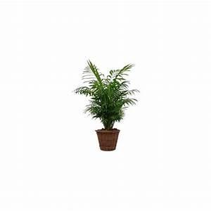 Cache Pot Tressé : palmier nain chamaedora cache pot tress plantes et jardins ~ Teatrodelosmanantiales.com Idées de Décoration