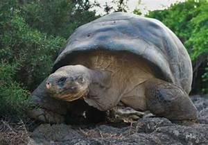 Rarest animal on Earth dies
