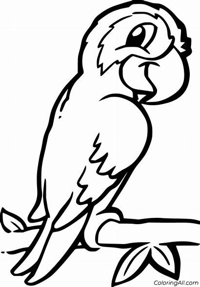 Macaw Coloring Coloringall Easy Animal Zoo Printable