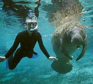 Swim with Manatees CrystalRiver