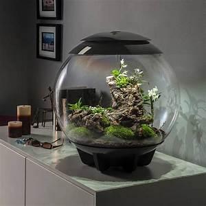 biorbair 60l terrariums