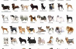 small cute dog breeds with picture and name
