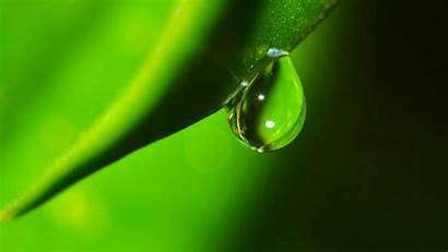 Droplets Leaf Drops Wallpapers Nature Background Water