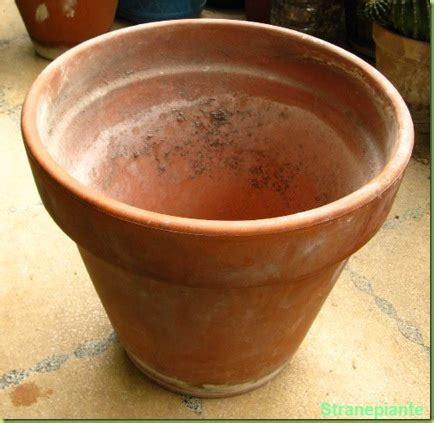 vaso di coccio quali vasi comprare per le piante grasse
