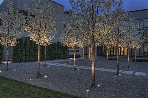 trees for modern landscape entry courtyard at night contemporary landscape san francisco by terra ferma landscapes