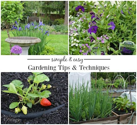 Simple & Easy Gardening Tips And Techniques {tuesdays In