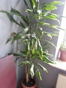 Plante D Intérieur : plantes d 39 interieur les plantes d 39 interieur pinterest ~ Dode.kayakingforconservation.com Idées de Décoration