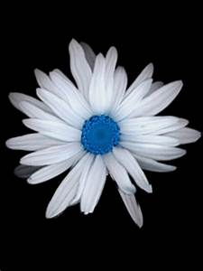 Animated Rotating White Flower Mobile Phone Wallpapers ...