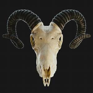 Diagram Of A Goat Skull