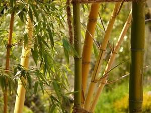 Bambus Im Winter : bambus gut durch den winter bringen ~ Frokenaadalensverden.com Haus und Dekorationen