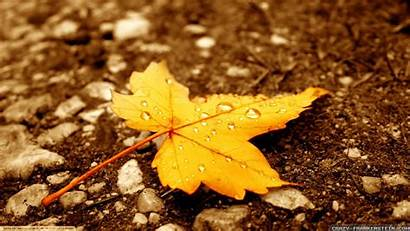 Autumn Leaves Wallpapers Leaf Yellow Leave Wide