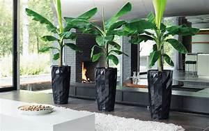Große übertöpfe Für Zimmerpflanzen : zimmerpflanzen sch ne arten f r jeden standort und pflege anspruch ~ Bigdaddyawards.com Haus und Dekorationen