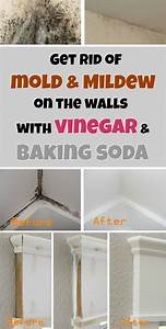 get rid of mold mildew on the walls with vinegar and With how to get rid of bathroom mildew