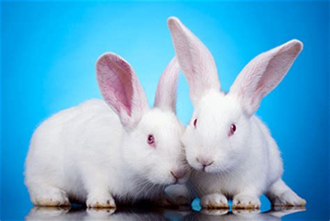 international rabbit day sep
