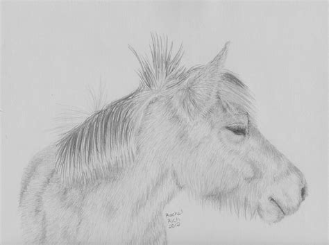 Fjord Drawing by Fjord Horse By Rcr123 On Deviantart
