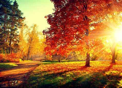 Beautiful Autumn Trees Wallpapers by Nature Forest Park Trees Leaves Colorful Road Path Autumn