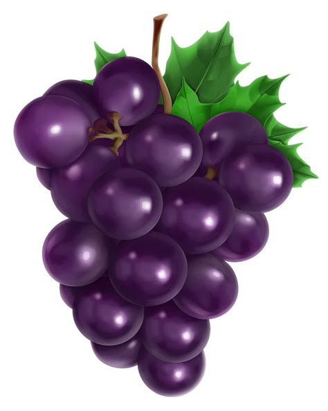 Grapes Transparent Gallery