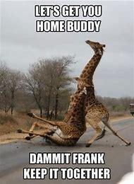 Giraffe Funny Drunk Memes